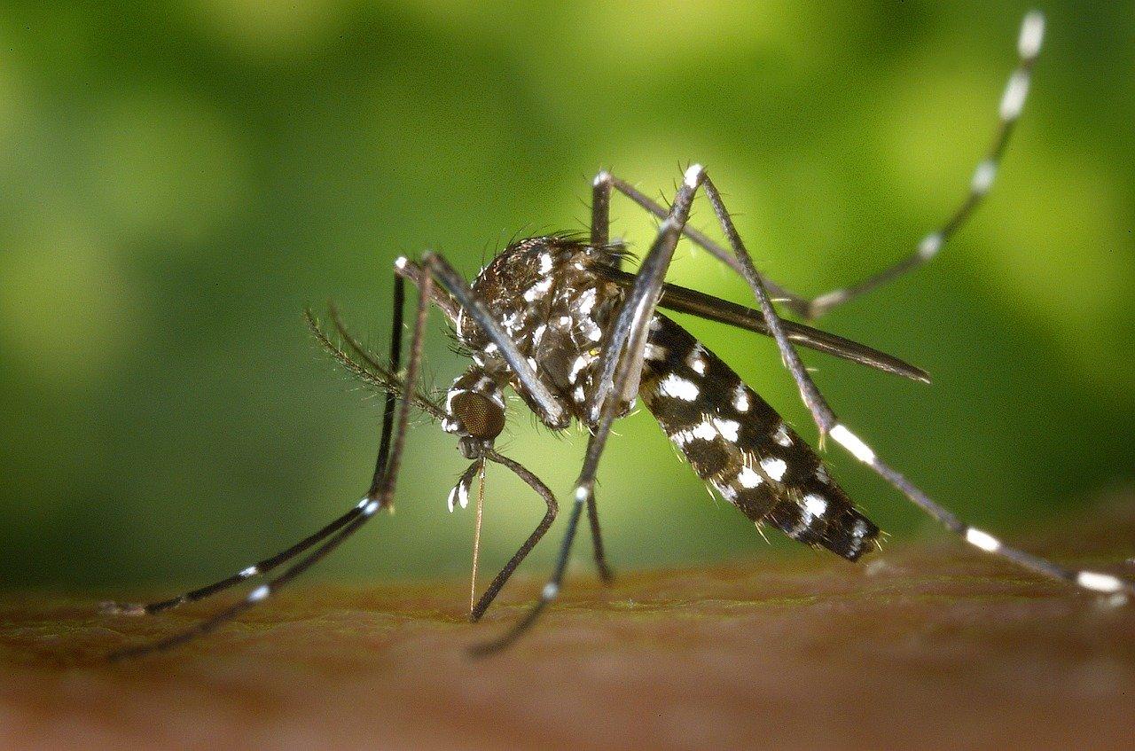 Pourquoi les piqûres d'insectes sont-elles dangereuses pour les enfants?